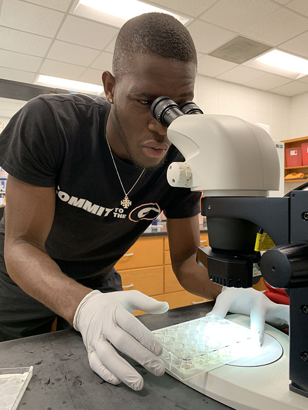 UGA student using a microscope for research