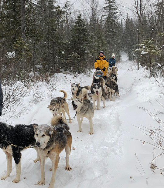 Andrew Potter on a dogsled